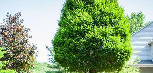 Complete Care Landscaping Pruning