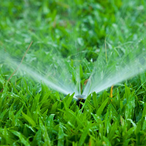 freshly watered lawn