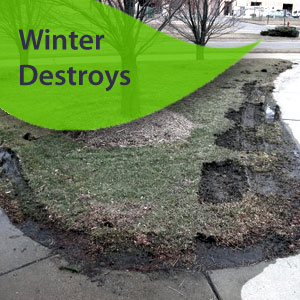 damaged winter grass